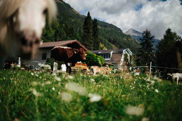 Slow Food Village Obervellach